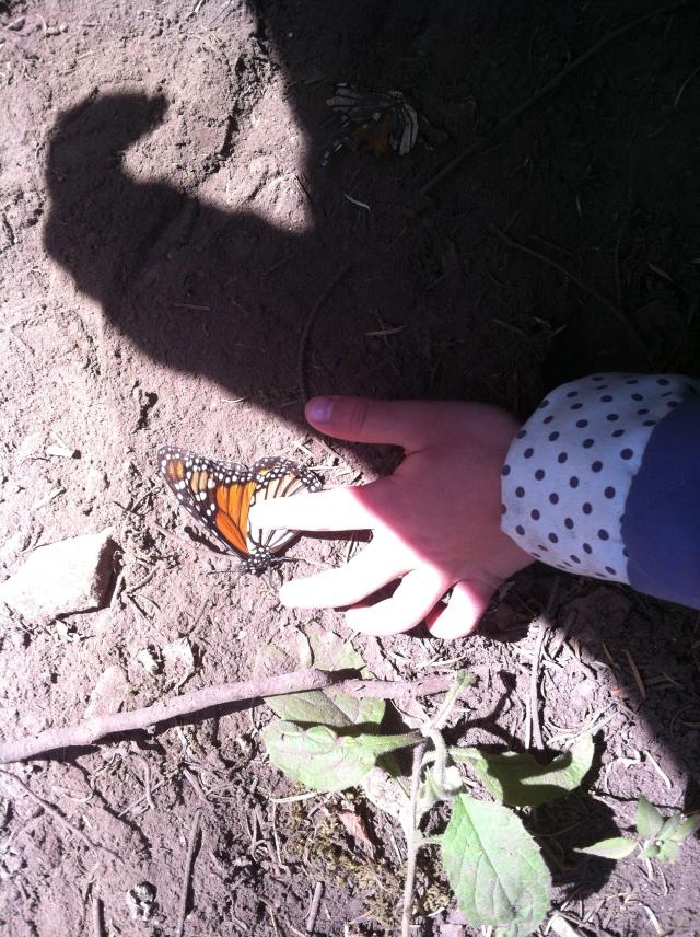 Little hands and lots of butterflies