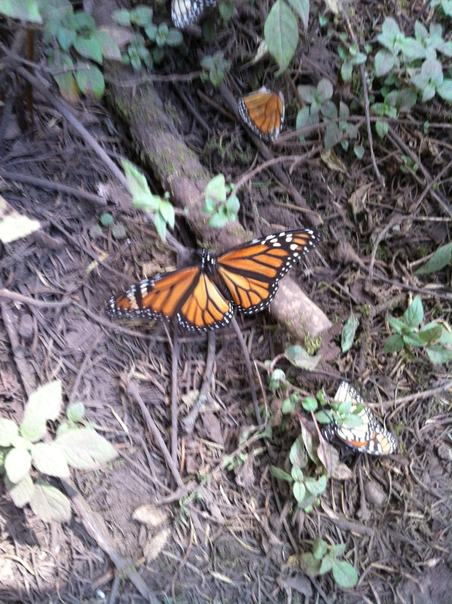 Butterflies on trees, stumps and leaves!