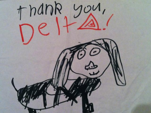Delta airlines pet travel